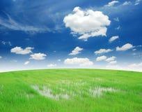 Campo del arroz e hierba verde Fotografía de archivo libre de regalías