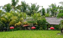 Campo del arroz en Bali, Indonesia Fotos de archivo libres de regalías