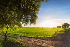 Campo del arroz en campo Foto de archivo libre de regalías