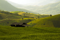 Campo del arroz en el norte de Tailandia Fotografía de archivo libre de regalías