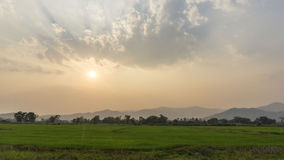 Campo del arroz en la puesta del sol imagen de archivo