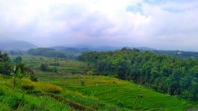 Campo del arroz en montañas Imagenes de archivo