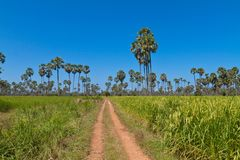 Campo del arroz en país asiático Foto de archivo libre de regalías