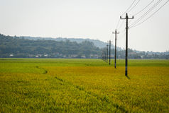 Campo del arroz en Phu Yen, Vietnam Fotos de archivo