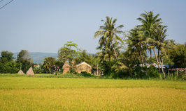Campo del arroz en Phu Yen, Vietnam Fotos de archivo libres de regalías