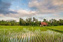 Campo del arroz en Ubud, Bali Fotografía de archivo libre de regalías