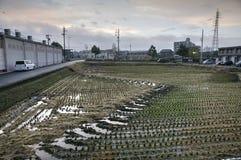 Campo del arroz en una cercanía de la ciudad japonesa Foto de archivo libre de regalías