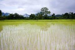 Campo del arroz en Vang Vieng Laos II imagenes de archivo