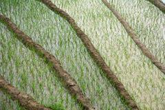 Campo del arroz en Yen Bai, Vietnam Foto de archivo libre de regalías