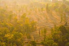 Campo del arroz entre árboles Imagen de archivo