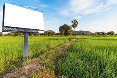 Campo del arroz por la mañana Imagenes de archivo