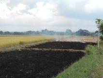 Campo del arroz que quema después de cosechar Imágenes de archivo libres de regalías