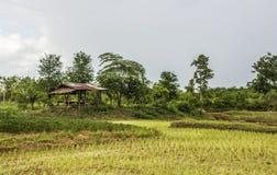 Campo del arroz y cabaña de madera en rural de Tailandia Imágenes de archivo libres de regalías