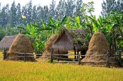 Campo del arroz y choza de la paja en Jim Thompson Farm Fotografía de archivo libre de regalías