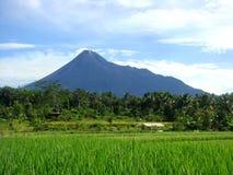 Campo del arroz y fondo de la montaña Imágenes de archivo libres de regalías