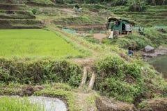 Campo del arroz y poca choza en Vietnam imágenes de archivo libres de regalías