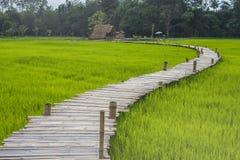 Campo del arroz y puente de bambú largo Fotos de archivo libres de regalías