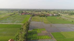 Campo del arroz y regi?n agr?cola en Indonesia almacen de video