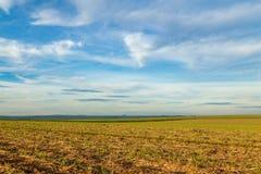 Campo del azúcar de caña, Dumont Fotos de archivo