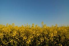 Campo del biodiesel. Imagenes de archivo