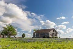 Campo del bluebonnet de Tejas y granero del abandono en Ennis, Tejas Fotos de archivo libres de regalías