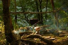 Campo del bosque Fotos de archivo