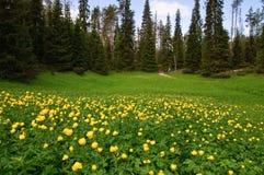 Campo del bosque Foto de archivo libre de regalías