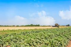 Campo del campo del calabacín y de trigo con la trilladora en el trabajo fotos de archivo libres de regalías