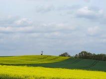 Campo del Canola o de la colza en alemán la región de Eifel Fotografía de archivo