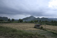 Campo del cha del té en Tailandia con el acercamiento del temporal de lluvia imagen de archivo