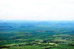 Campo del coco de la colina cerca del mar Foto de archivo