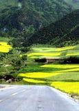 Campo del col, MenYuan, QingHai, China Fotos de archivo