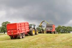 Campo del corte del forager de la máquina segador, ensilaje del cargamento en el tractor remolque Fotografía de archivo libre de regalías