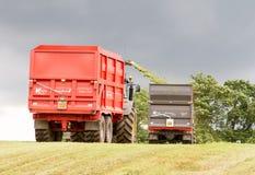 Campo del corte del forager de la máquina segador, ensilaje del cargamento en el tractor remolque dos Imagen de archivo