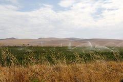 Campo del cotone che è irrigato fotografia stock libera da diritti