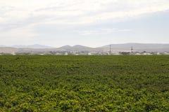 Campo del cotone che è irrigato fotografie stock libere da diritti
