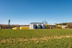 Campo del fiore del seme di ravizzone, della colza del canola in brassica napus sulla pianta d'elaborazione per l'elaborazione e  fotografia stock libera da diritti
