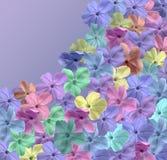 Campo del flor Imágenes de archivo libres de regalías