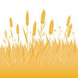 Campo del fondo del grano, dell'orzo o della segale illustrazione di stock