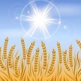 Campo del fondo del paesaggio del grano illustrazione di stock