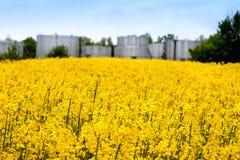 Campo del fondo floreciente del depósito del grano de la rabina fotos de archivo