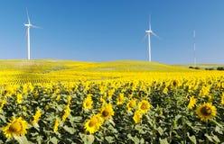 Campo del girasol con dos molinoes de viento Fotografía de archivo libre de regalías