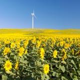 Campo del girasol con el molino de viento Fotos de archivo