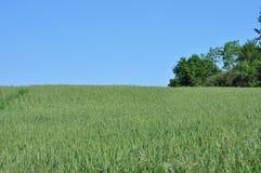 Campo del grano Fotografía de archivo