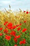 Campo del grano y de la amapola fotografía de archivo