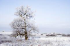 Campo del invierno Fotos de archivo libres de regalías
