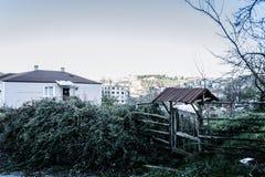 Campo del invierno con colores silenciados Foto de archivo libre de regalías