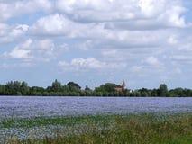 Campo del lino en la floración (usitatissimum de Linum) Fotos de archivo libres de regalías