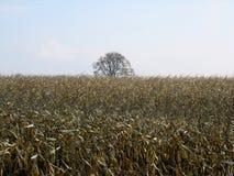 Campo del maíz después de la cosecha con las fotos claras de una cielo-acción Foto de archivo libre de regalías
