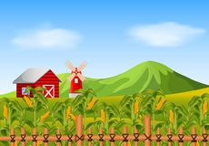 Campo del maíz y del granero rojo Foto de archivo libre de regalías